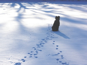 Dog ponders winter solstice.jpg