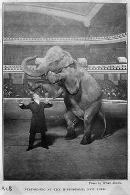 Making the elephant vanish